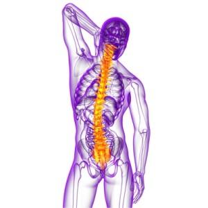 Corps humain avec colonne vertébrale